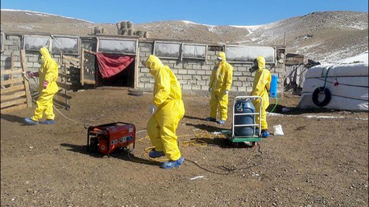 New Bubonic Plague Cases Send Mongolian Region Along ...