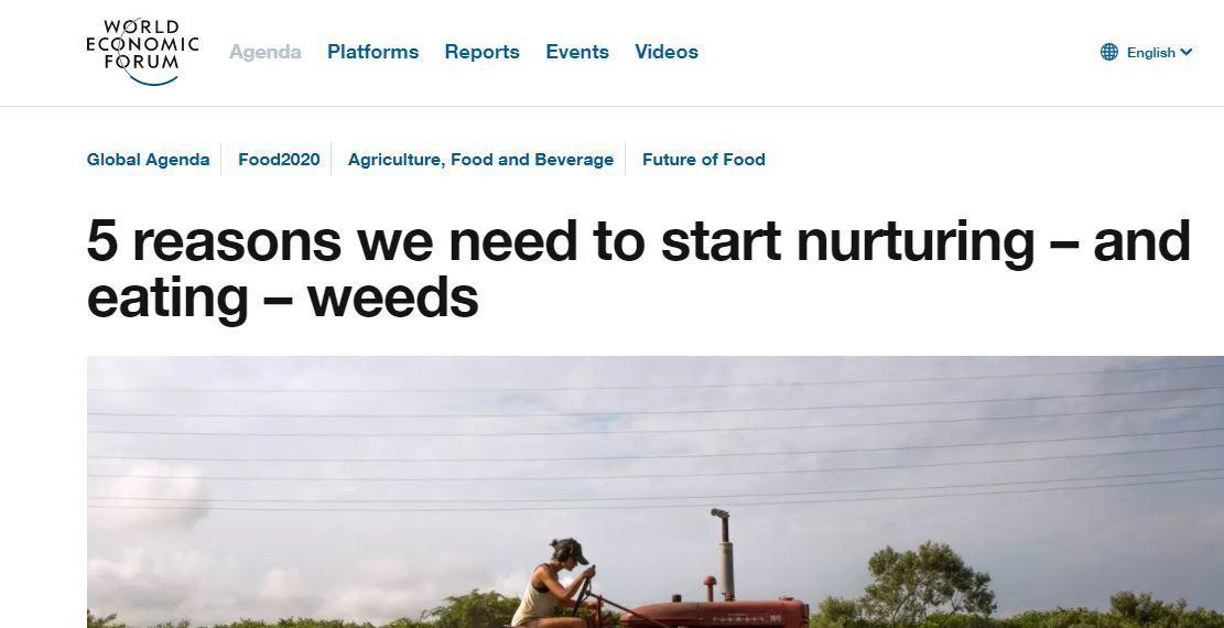 Всемирный экономический форум призывает людей есть сорняки и пить сточные воды